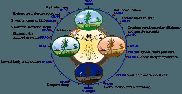 ritmo-circadiano