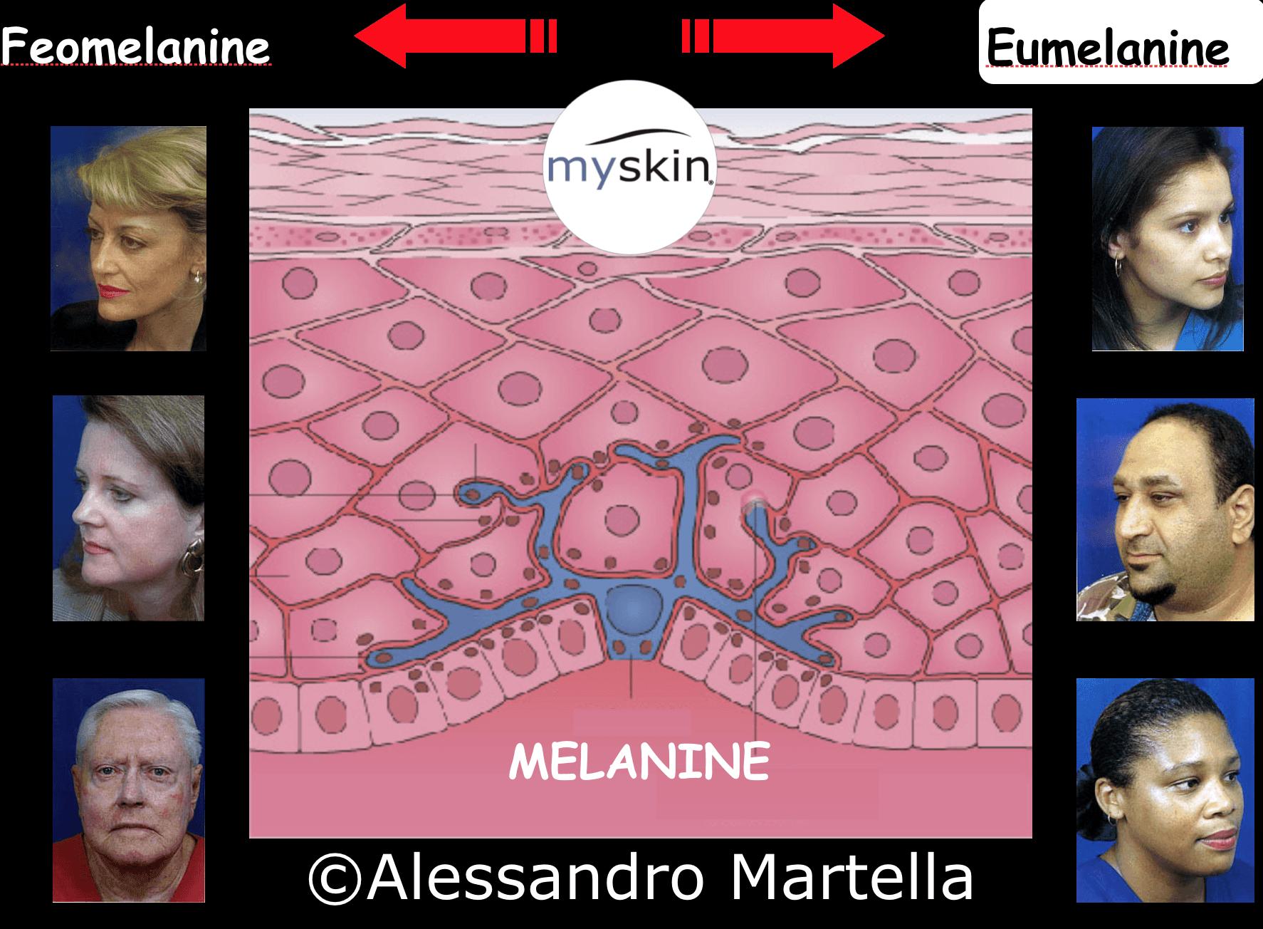 Melanine: rappresentazione schematica