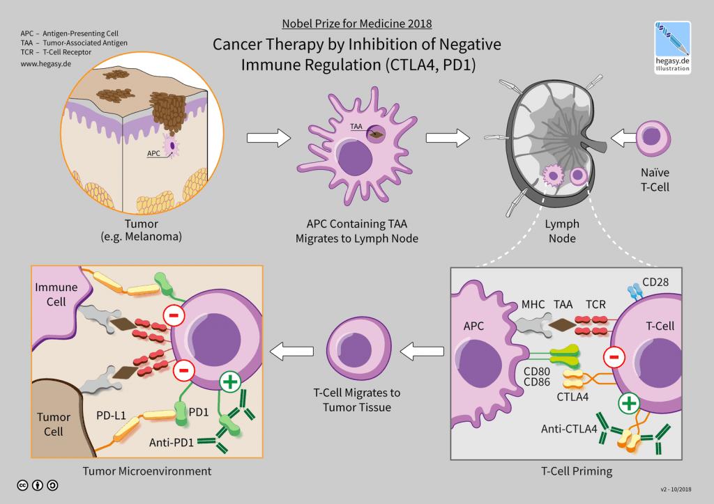 Come funziona l'Immunoterapia