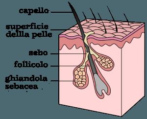 follicolo_pilifero