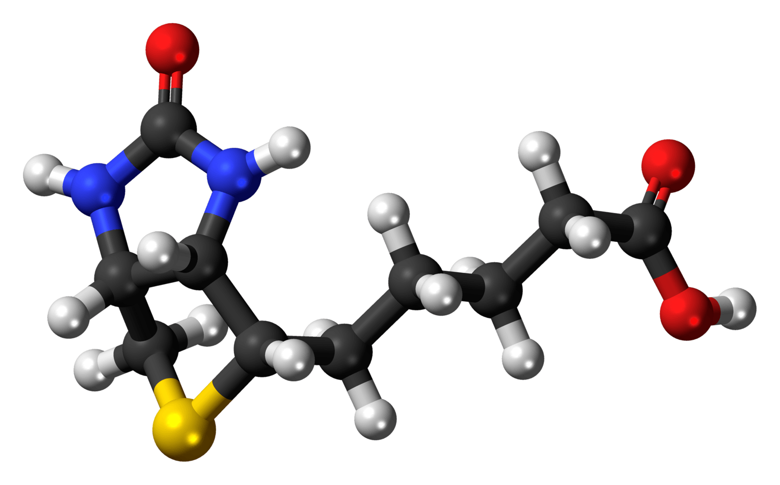 Biotina molecola